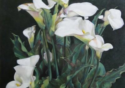 Garden Callas